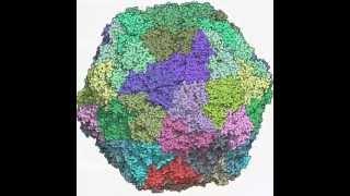 GRAPEVINE FANLEAF VIRUS - color (SPLIT PDB : 2Y7T, 2Y7T, 2Y7V)