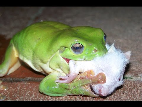 Лягушки (25 фото) » Прикольные картинки, фото приколы