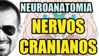 Danos sintomas telugu de em nos cerebrais nervos