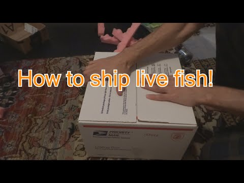 How To Ship Live Fish! Step By Step. Easy.