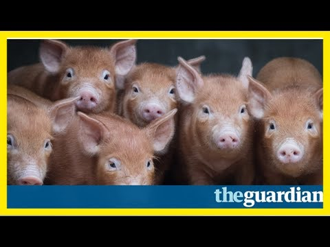 Mps hog social media as they deny voting animals are not sentient