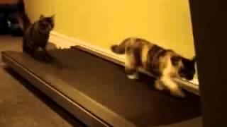 Яички приколы с котами