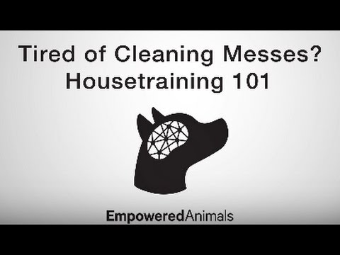 Essential Housetraining Tips: Potty Train Your Puppy or Dog