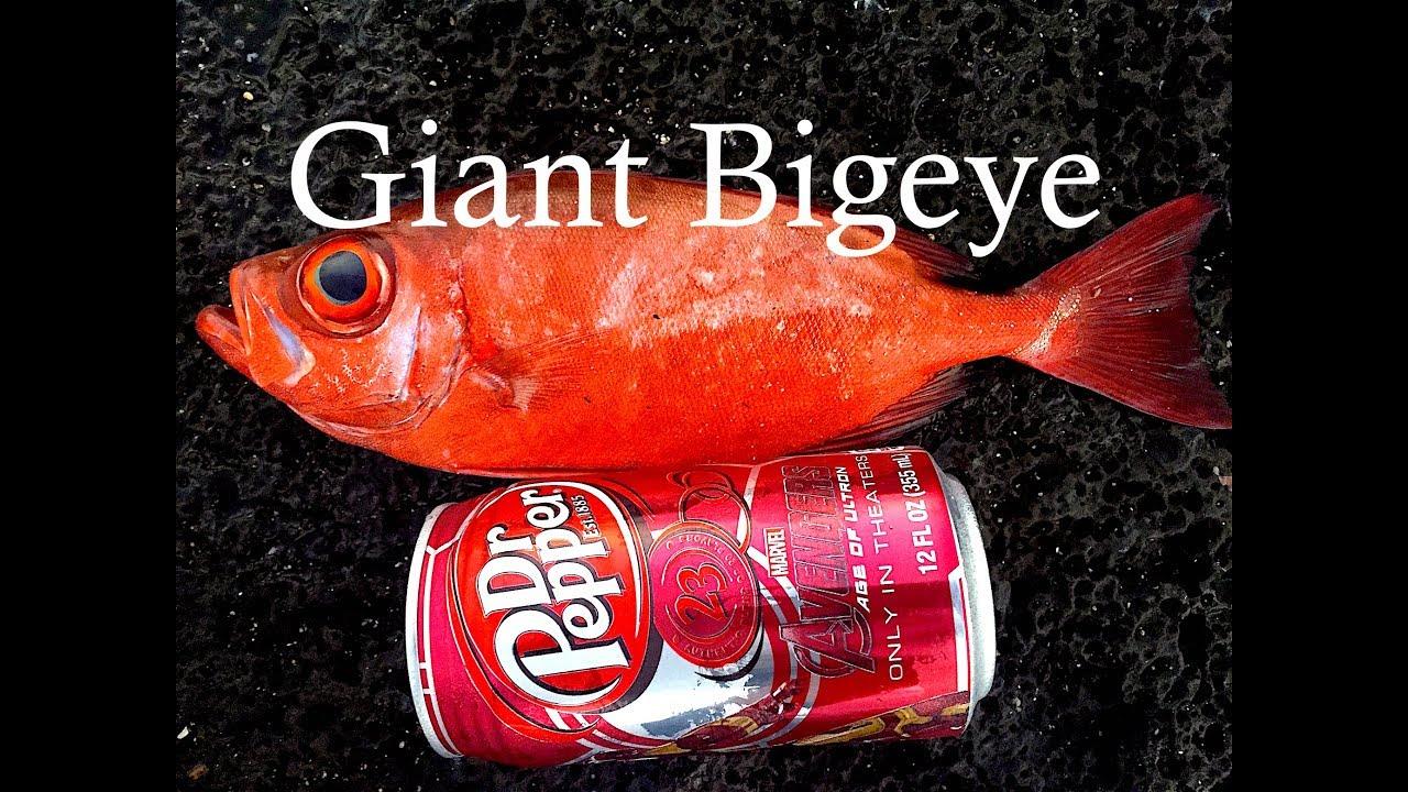 giant bigeye aweoweo fish on extended glow grub! - youtube, Reel Combo