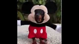 Dog Dressed As Mickey Mouse