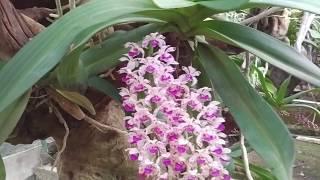 Đây là cách con nhà người ta trồng và chăm sóc Lan rừng | Orchid