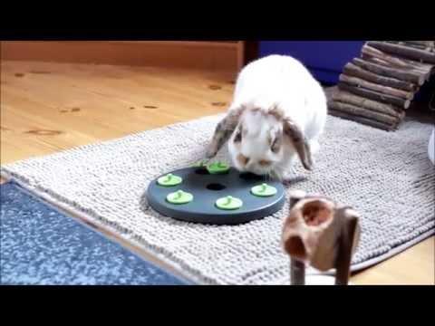 Bunny Barney a odkrývací deska na pamlsky