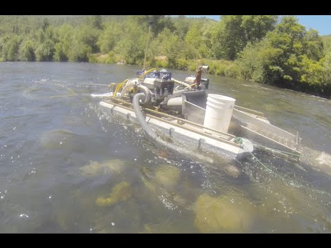Speed Gold Dredging on the Rogue River! - GoPro Dredging Series Part 1