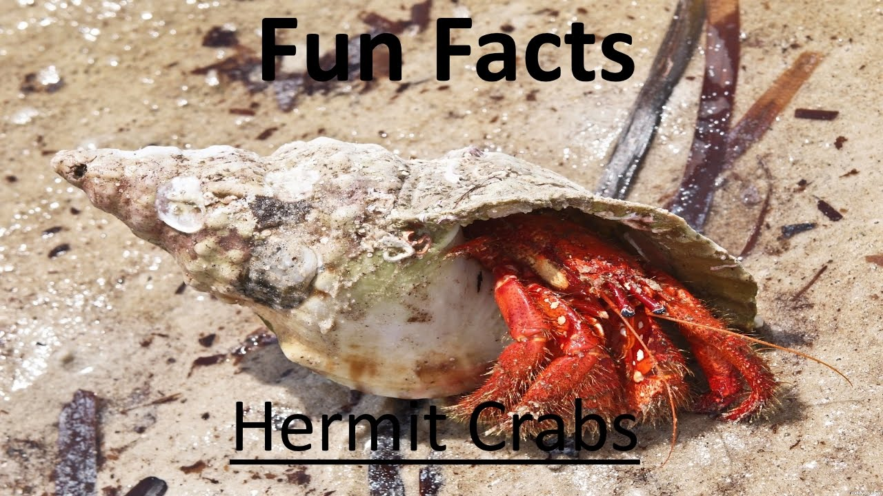 R Crabs Data 10 Interesting Facts a...