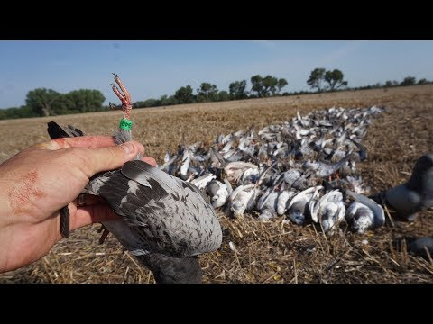 WILD Pigeon Hunting With 2 BANDS! (COPS CALLED)