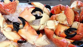 INSANE Seafood EXTRAVAGANZA at the SOUTH FLORIDA SEAFOOD FESTIVAL