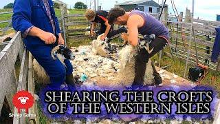 MY FARMING BUCKET-LIST     Shearing sheep on the Isle of Lewis