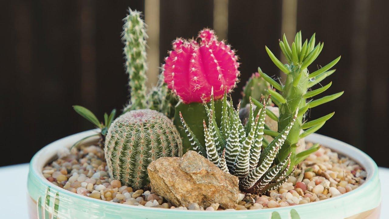 Cactus Container Garden  YouTube