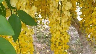 11 Plantas que Vão Colorir o Jardim em Clima Quente