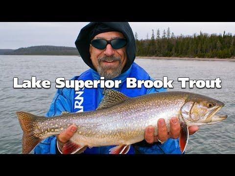 Lake Superior Brook Trout And Steelhead   Fish'n Canada