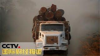 [国际财经报道]关注亚马孙雨林大火 玻利维亚总统:愿意接受国际援助来灭火| CCTV财经