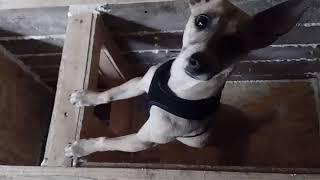 Будка для собаки-winter house
