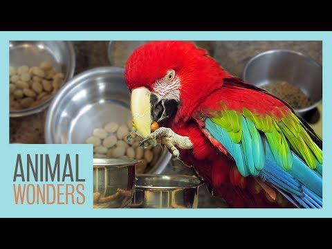 parrots diet video watch HD videos online without registration