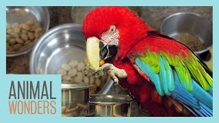 Preparing A Proper Parrot Diet