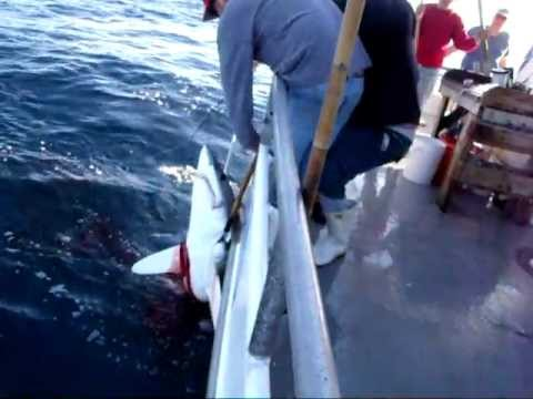 Deep sea fishing port aransas tx 1 5 12 pt 2 youtube for Port aransas deep sea fishing