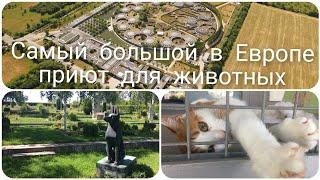 Приют для животных. Кладбище домашних животных.1серия. #приютдляживотных #кладбищедомашнихживотных