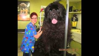 największe psy świata !