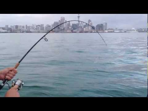 Snapper fishing - Waitemata Harbour