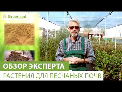 Растения для песчаных почв