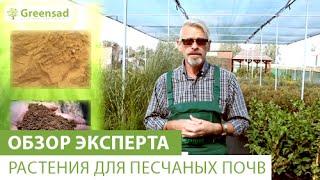 Растения для песчаных почв(В этом видео наш эксперт расскажет Вам какие растения подходят для песчаных почв. Большой выбор растений..., 2015-01-06T14:37:53.000Z)