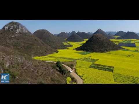 Aerial view: ocean of rapeseed flowers in Yunnan