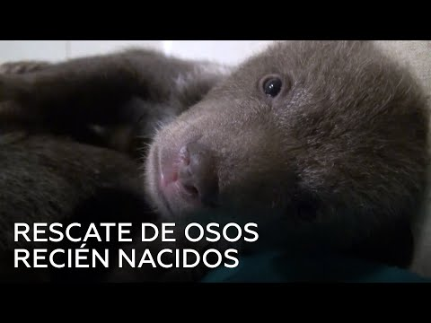 Curso Cultivo de Milho Hidropônico - Para Alimentação Animal - Cursos CPT from YouTube · Duration:  3 minutes 51 seconds