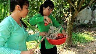 Vào Vườn Mận ăn Bao No xong đem về làm món Gỏi Mận | Thôn Nữ Miền Tây Tập 64