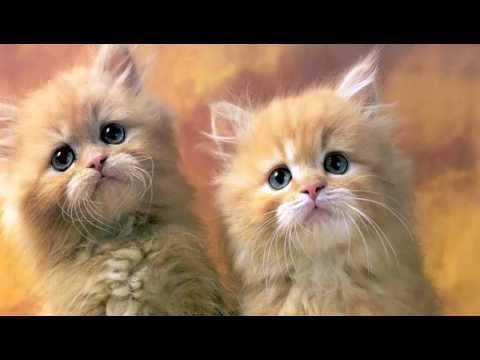 Cat pictures and cat sounds, Cats Meow, Cat Treat