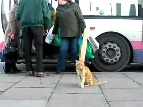 Cat love Ride with Bus and Never Get Lost