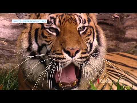 Tiger kills keeper at Hamilton Zoo, New Zealand