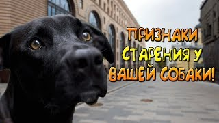 Старение вашей собаки, признаки и последствия!