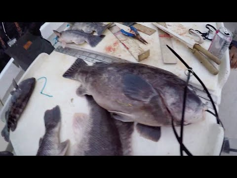 Episode 16 : Triple Challenge Blackfish Tournament January 26th