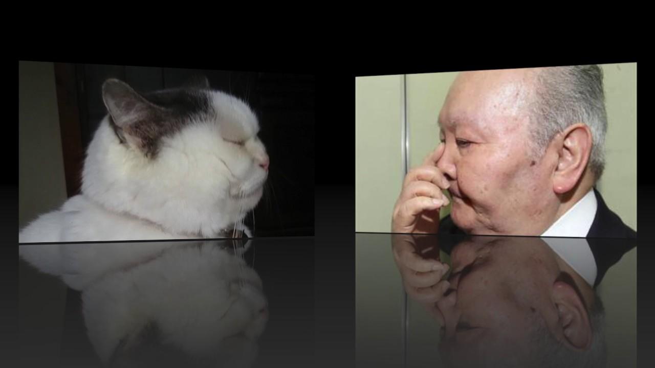 【加藤一二三九段】 ひふみん似の面白ネコ!