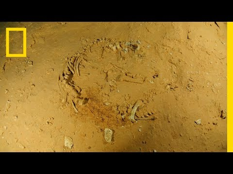 Rare Find: Extinct Sloth Fossils Discovered In Underwater Cave | National Geographic