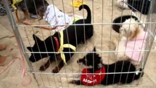 Barks Of Love Animal Rescue Orange County California