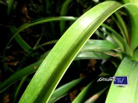 Peligro por plantas de ornato, plantas tóxicas