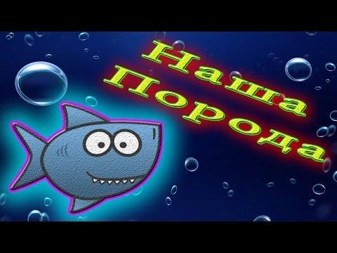 Аквариумные рыбки на букву Г