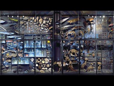 Biodiversitätswand im Museum für Naturkunde Berlin jetzt in VR