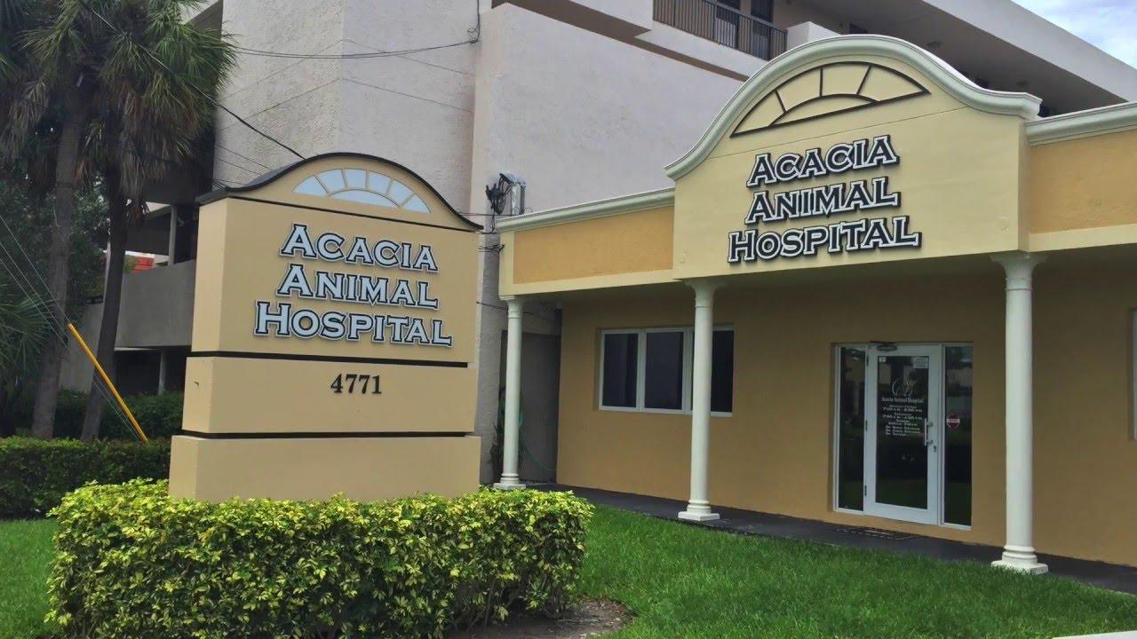 Acacia Animal Hospital Pompano Beach Florida