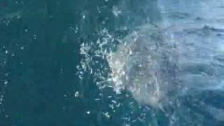 19年11月17日8m以上の大物に大興奮でした、ぜひ見てください。釣り thumbnail