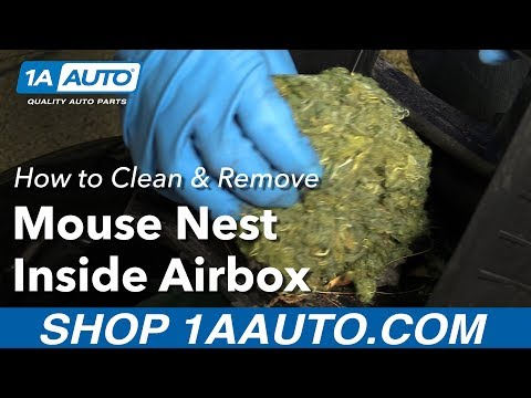 How to Clean and Remove a Mouse Nest Inside Air Box in your Car