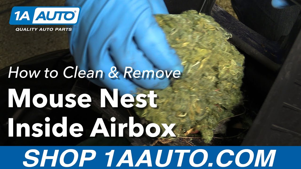medium resolution of how to clean and remove mouse nest inside air box