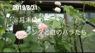 8月末日の夏のバラたち 令和元年