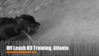 Heeling Vs Loose Leash Walking | Rottweiler | Dog Training Atlanta