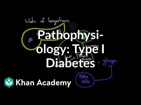 Pathophysiology - Type I diabetes   Endocrine system diseases   NCLEX-RN   Khan Academy